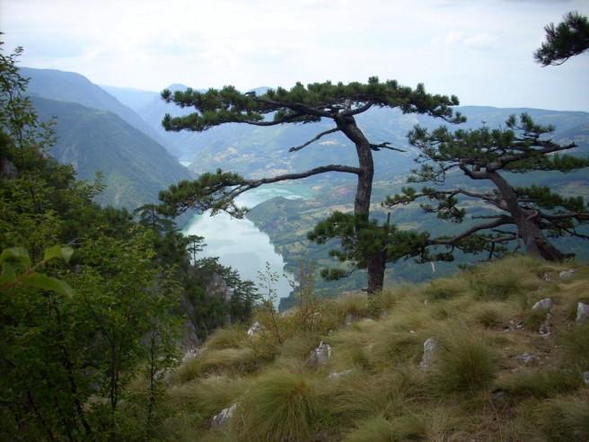 Slika 6 A Tara Panorama