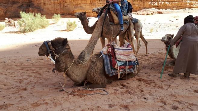kamile.jpg
